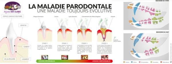 Affiche-veterinaire-Poster-parodontale-Alizee-PRINT