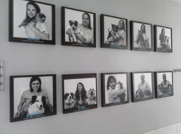Photos individuelles sur tableaux- Clinique vétérinaire de la Bastide-84-Robion