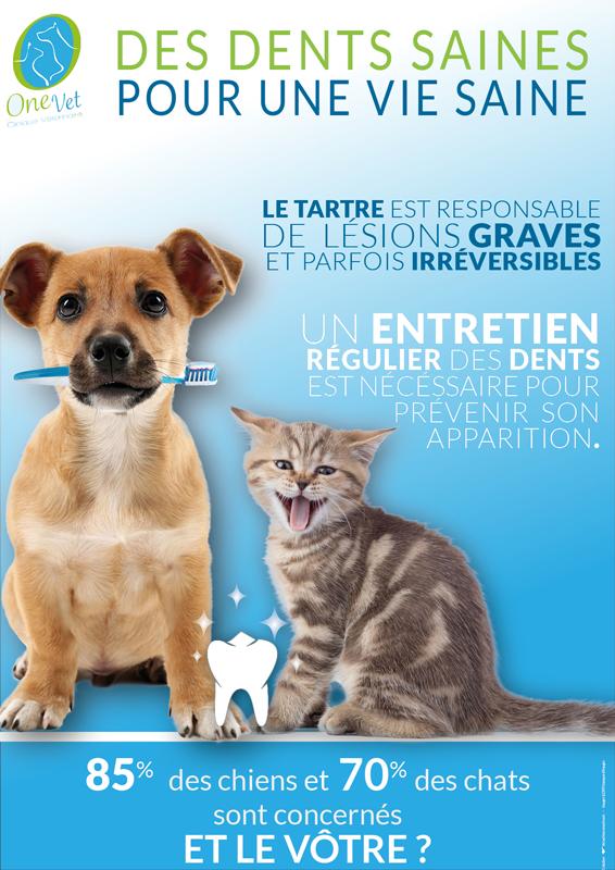 Affiche-vétérinaire-dents