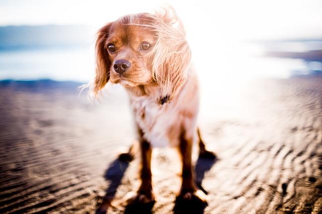 Chien plage soleil