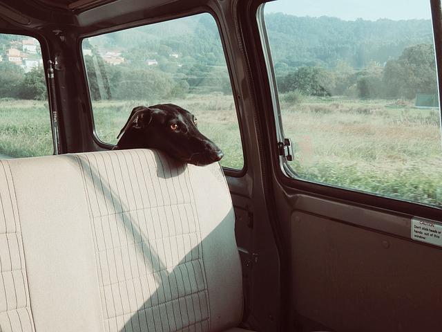 Chien en voiture au soleil