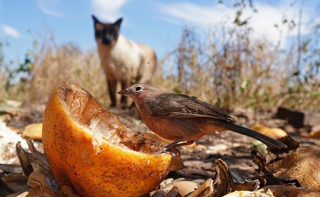Chat chasse un oiseau
