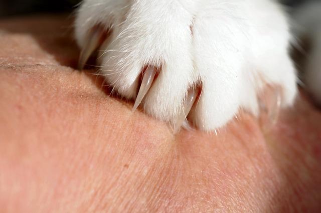 Griffure de chat