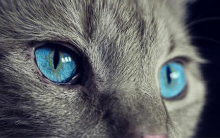 Yeux bleux