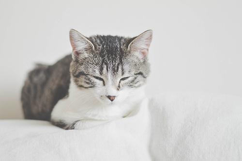 Le ronronnement est souvent associé à un chat apaisé