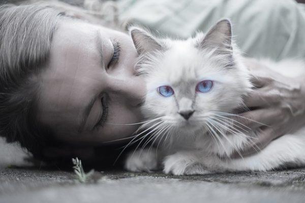 Lien chat et homme