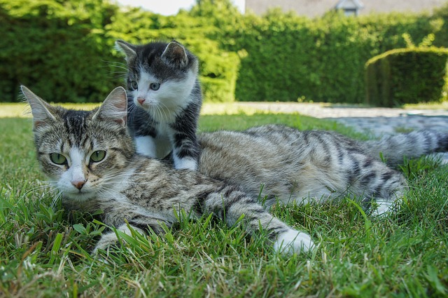 Une chatte avec son chaton.