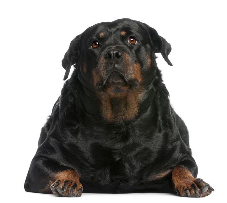 L'obésité : un facteur de risque élevé d'arthrose