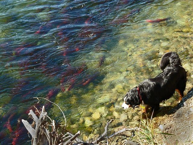 Chien devant une eau stagnante