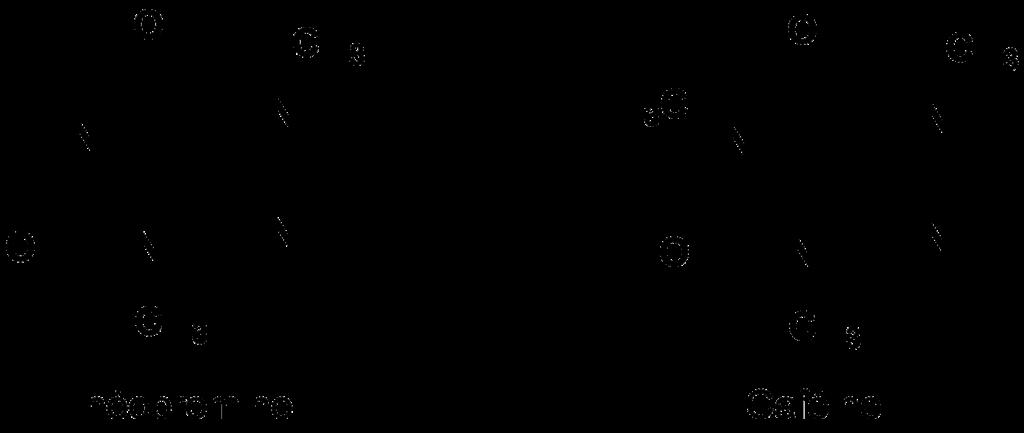 Théobromine et caféine : deux molécules assez proches