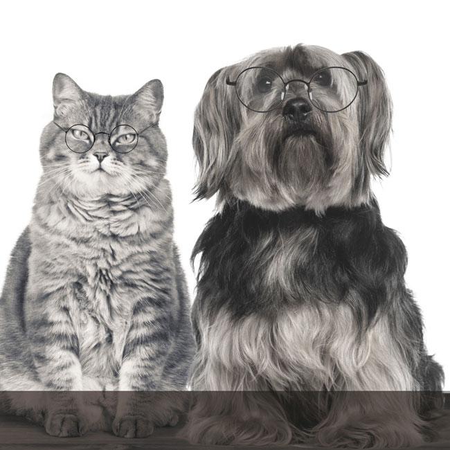 Services bilans senior pour-vétérinaires Vetaction conseil York