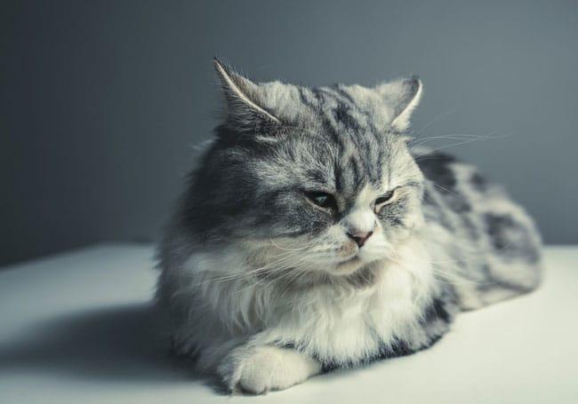 Services-bilans-senior-pour-vétérinaires-Vetaction-conseil-chat