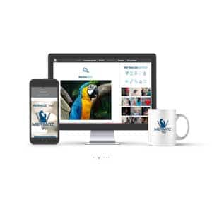 Site Internet Mermoz Vet