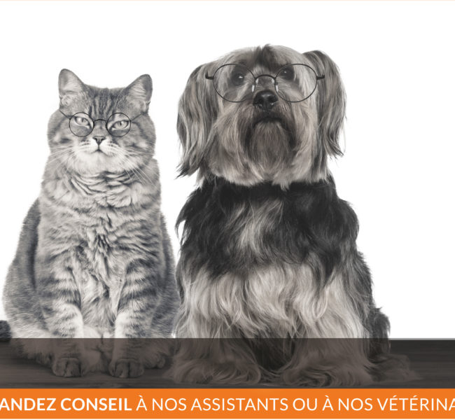 Vetaction Bilans senior