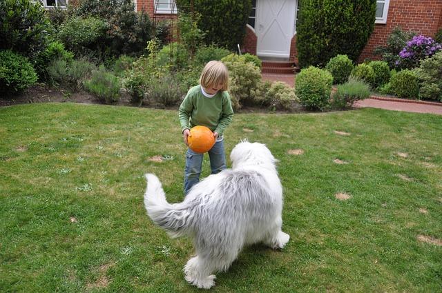 chien qui joue avec un enfant