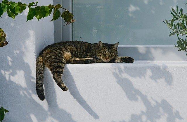 Chat dort à l'ombre